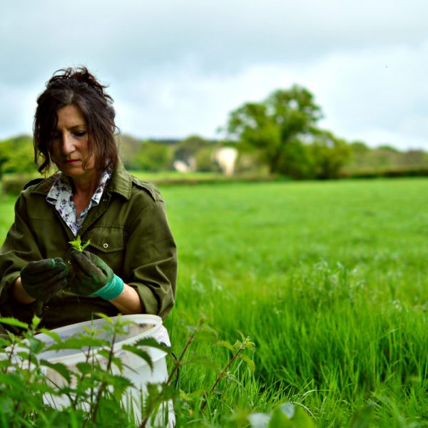A Lyme Bay employee hand-picking nettles for our nettle wine
